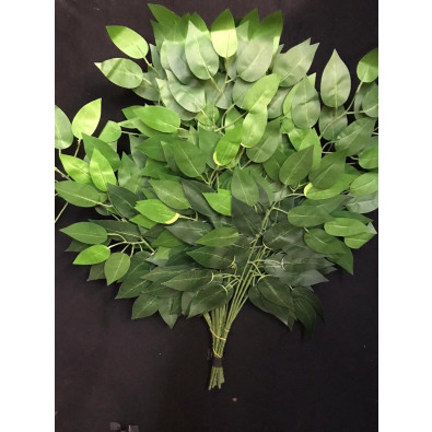 Docena hoja de ficus verde