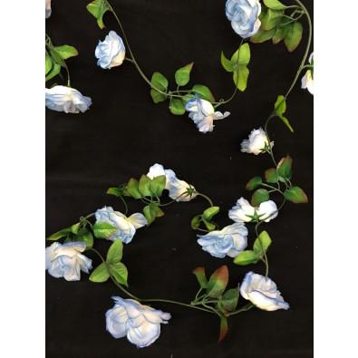 Guia de Rosa Grande Azul-Blanco